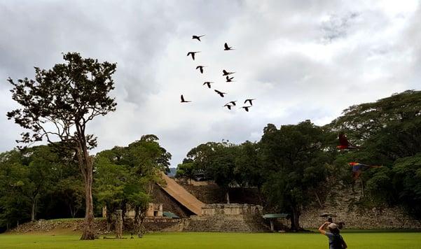 Birding-for-Conservation-3-by-DSJ.jpg