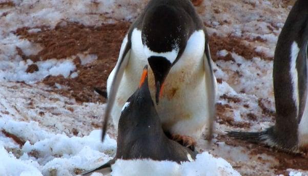 Antarctica-7-by-Sandy-Doss.jpg