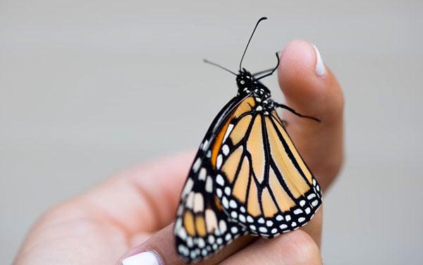 Backyard-butterfly-by-Stefanie-Plein