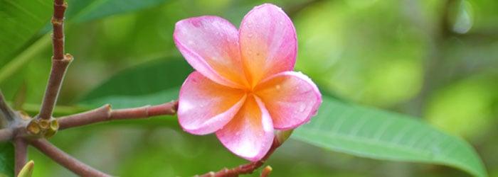 Belize-flower-by-Jen-Bruck.jpg