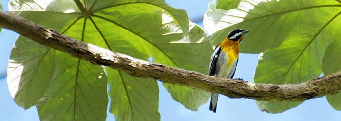 Cuba-birding-by-Stefanie-Plein.jpg