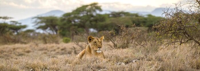 Lion-stock.jpg