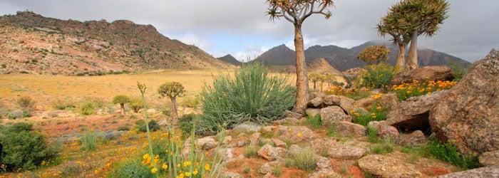 Namaqualand-stock.jpg