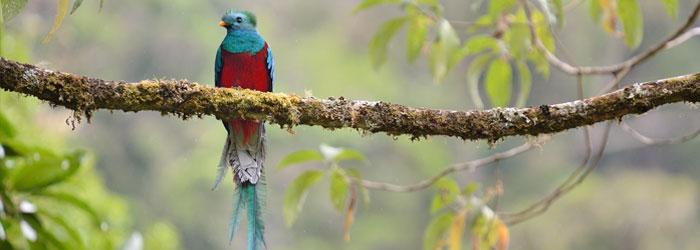 Resplendent-Quetzal-stock.jpg