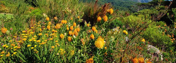 South-Africa-flora-stock.jpg