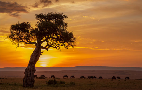 Africa-sunset-by-Eric-Lindberg