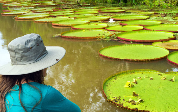 Amazon-water-lilies-stock-blog-inline