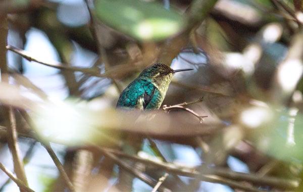 Bee-hummingbird-Stefanie-Plein-blog-inline