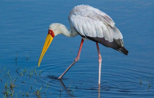 Birding-by-Eric-Lindberg