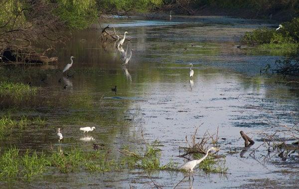 Birding-in-Keoladeo-by-Pelin-Karaca-blog-inline