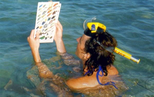 Classifying-marine-life-by-Debbie-Sturdivant-Jordan-blog-inline.jpg