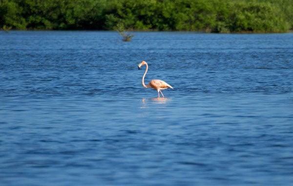 Flamingo-by-Stefanie-Plein