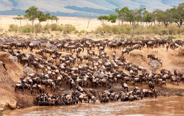 Great-Migration-stock-2