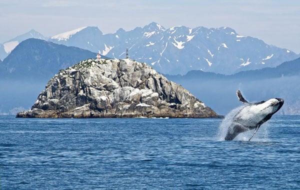 Humpback-Whale-public-domain.jpg