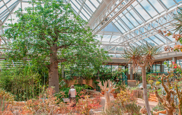 Kirstenbosch-Gardens-stock