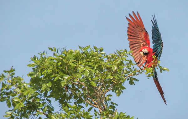 Macaw-by-Cindy-Cone-blog-inline.jpg