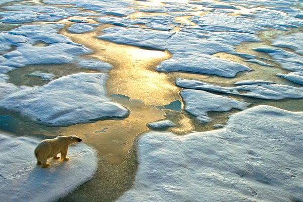 Polar-bear-on-ice-stock