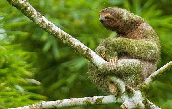 Sloth-by-Greg-Basco-blog-inline.jpg