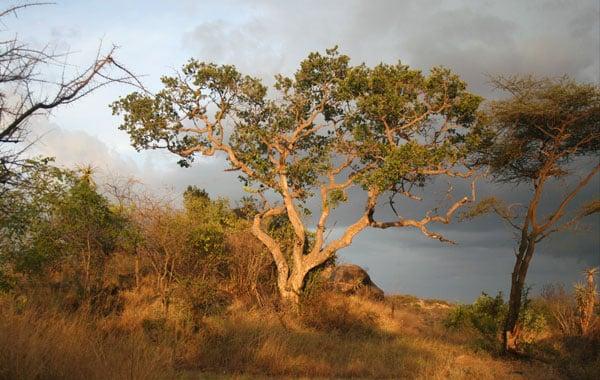 Sunset-in-Uganda-Pelin-Karaca