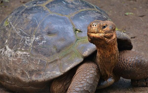Tortoise-Laura-Hare