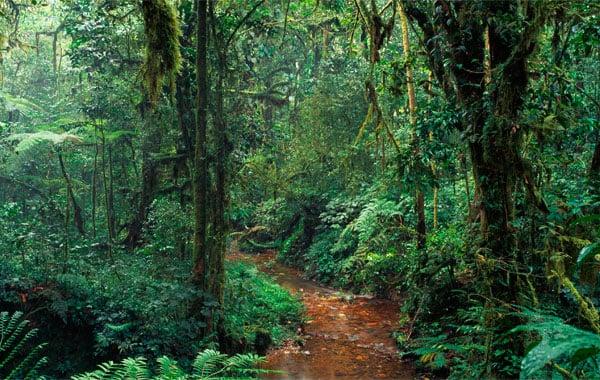 Uganda-jungle-stock