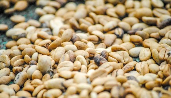 Coffee-3-by-Ashley-Loza.jpg
