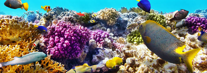 Coral-reef-stock-blog-header.jpg