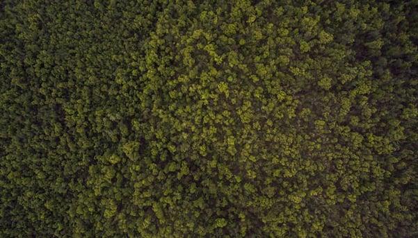 Forest-stock.jpg