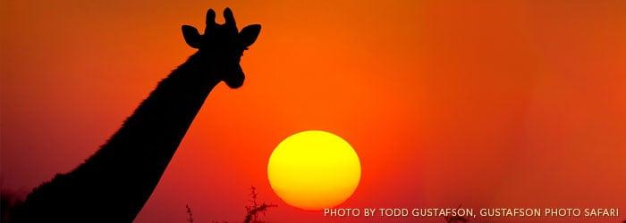 Giraffe-in-Namibia-by-Todd-Gustafson-Gustafson-Photo-Safari.jpg
