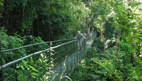 Hanging-bridges-by-Deb-Savarese-blog-inline.jpg