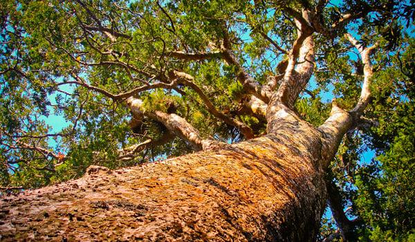 NZ-tree-stock