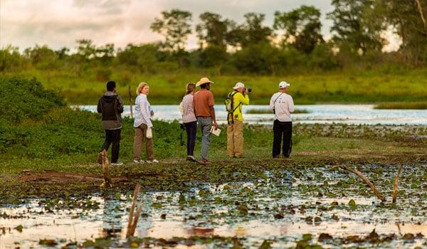 Pantanal-stock