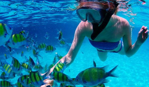 Snorkeling-stock