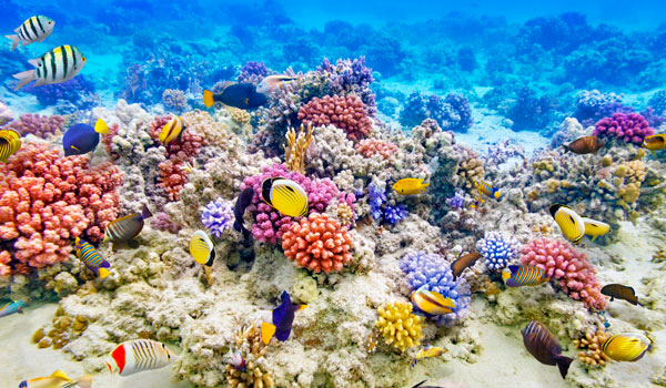 Great-Barrier-Reef-stock-blog