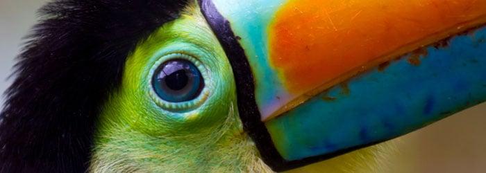 Toucan-fotolia-blog-header.jpg
