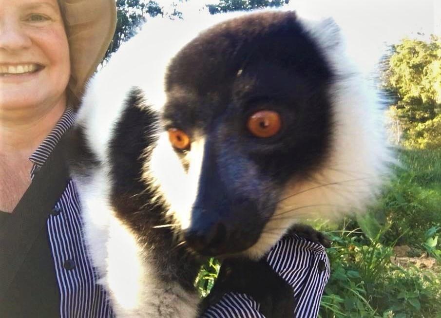 6.19.lemur1