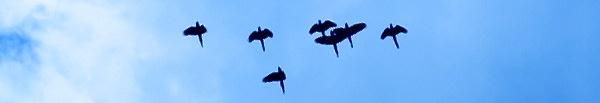 Flyway-Webinar-Hubspot-Great-Green-Macaws-by-Joanna-Livingstone.jpg