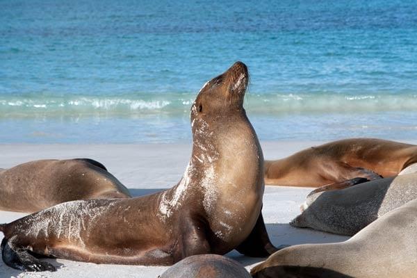 Sea-Lion-Jill-Richmond